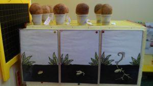rast-biljke